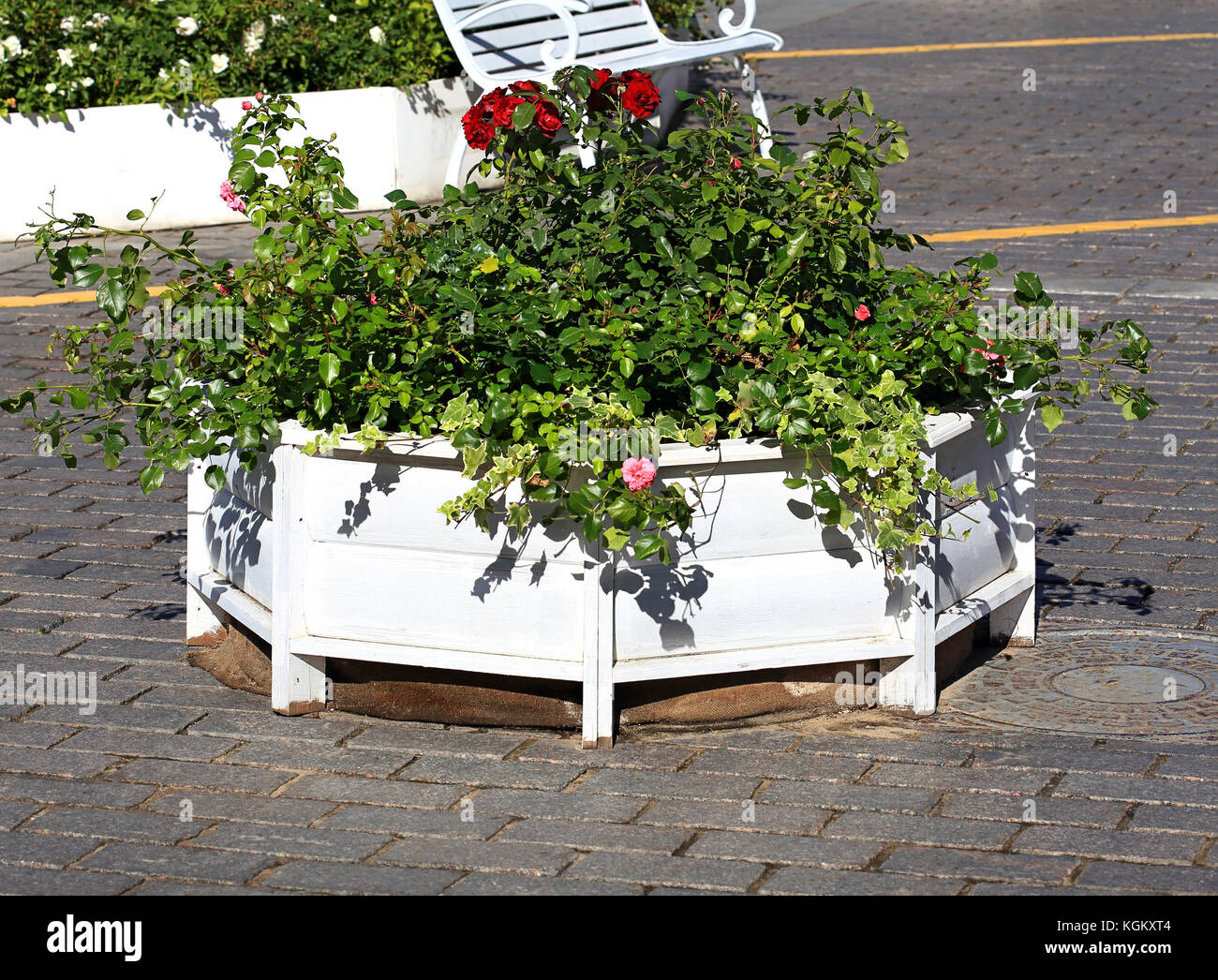 Wooden base with small-leaved ornamental shrubs to decorate squares - Stock Image