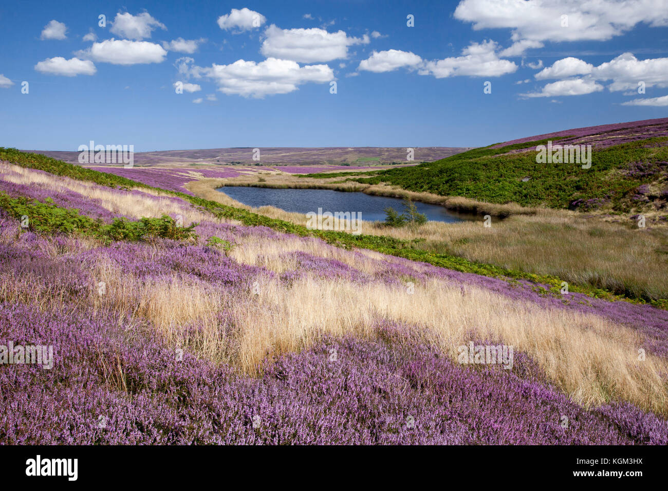The Tarn Two Howes Rigg above Goathland North York Moors national park North Yorkshire, England,UK - Stock Image