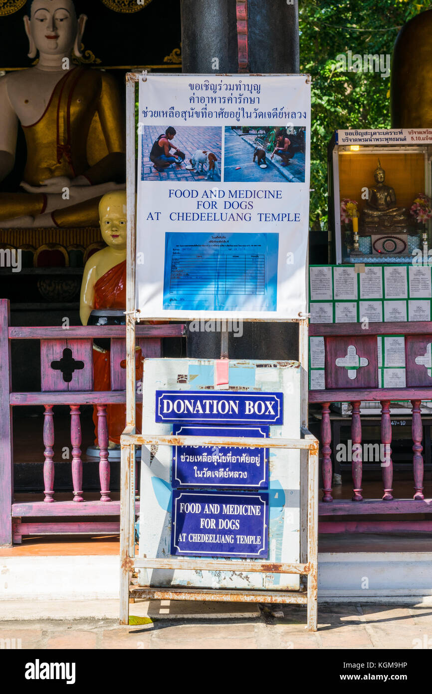 Donation box for needy dogs at a temple in Chiang Mai, Thailand - Stock Image