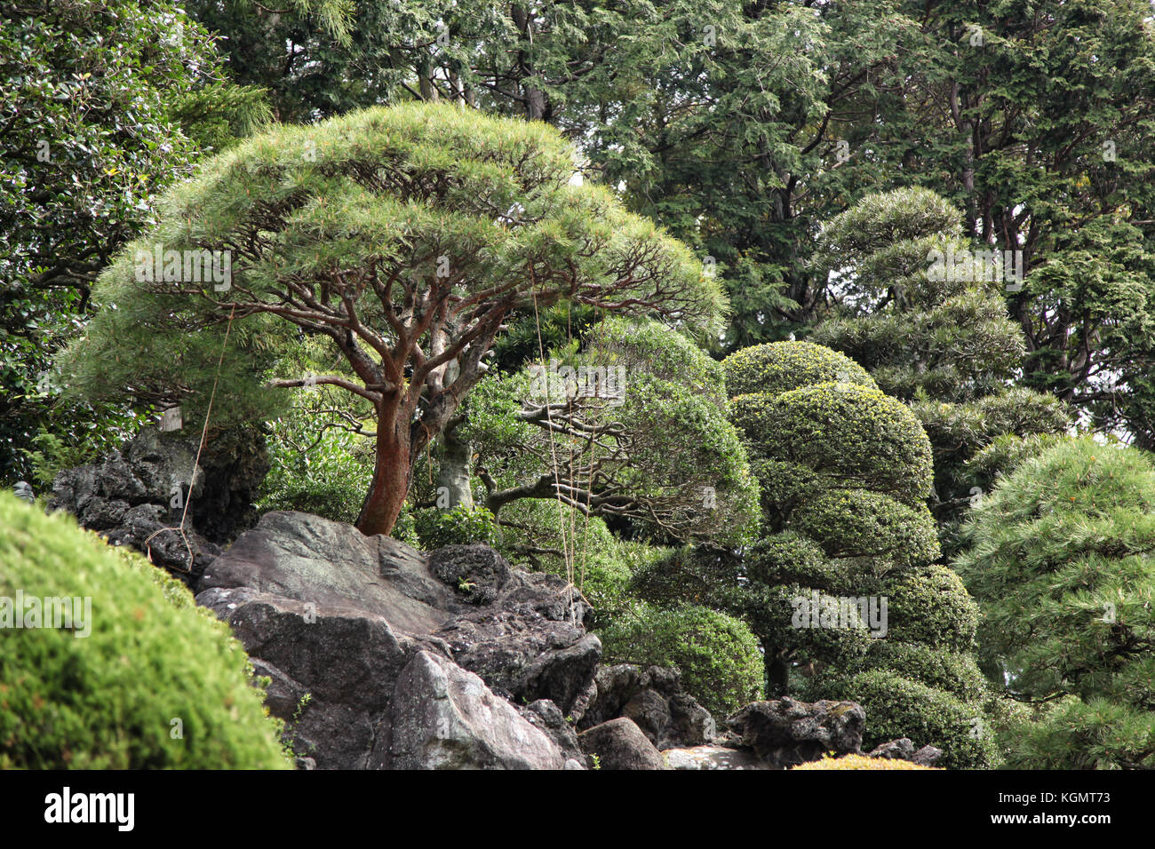 Bonsai Trees Growing Outdoor In A Garden On A Slope Stock Photo Alamy