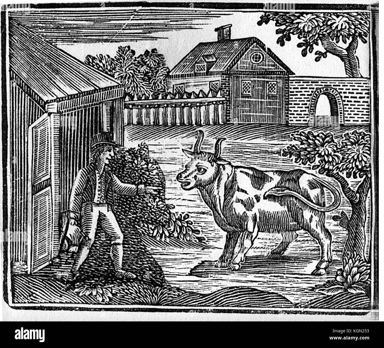 An early woodcut showing an English  farmer carrying a saddle ready to ride his oxen or cow - Stock Image