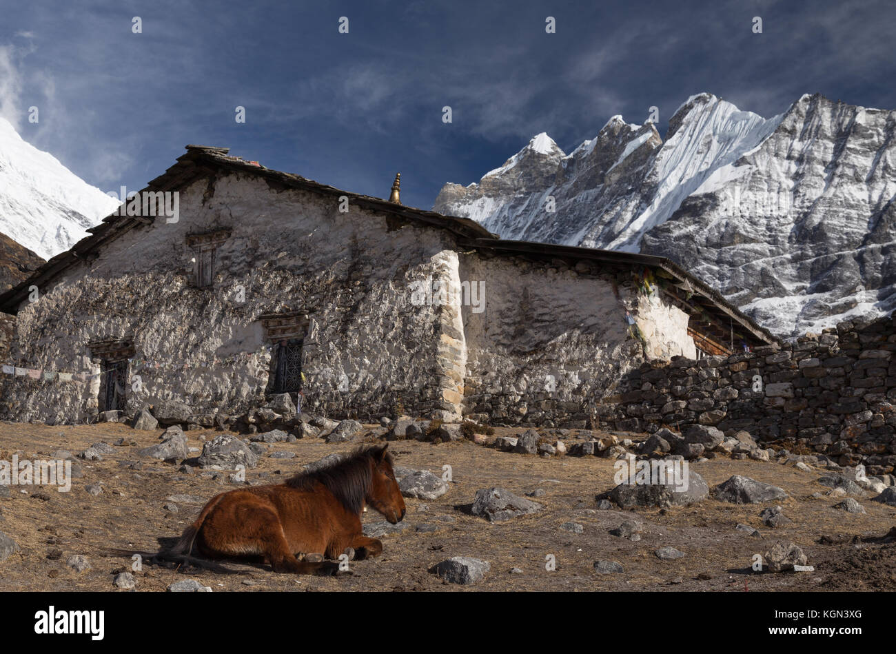 Horse resting in Langtang Valley, Nepal - Stock Image
