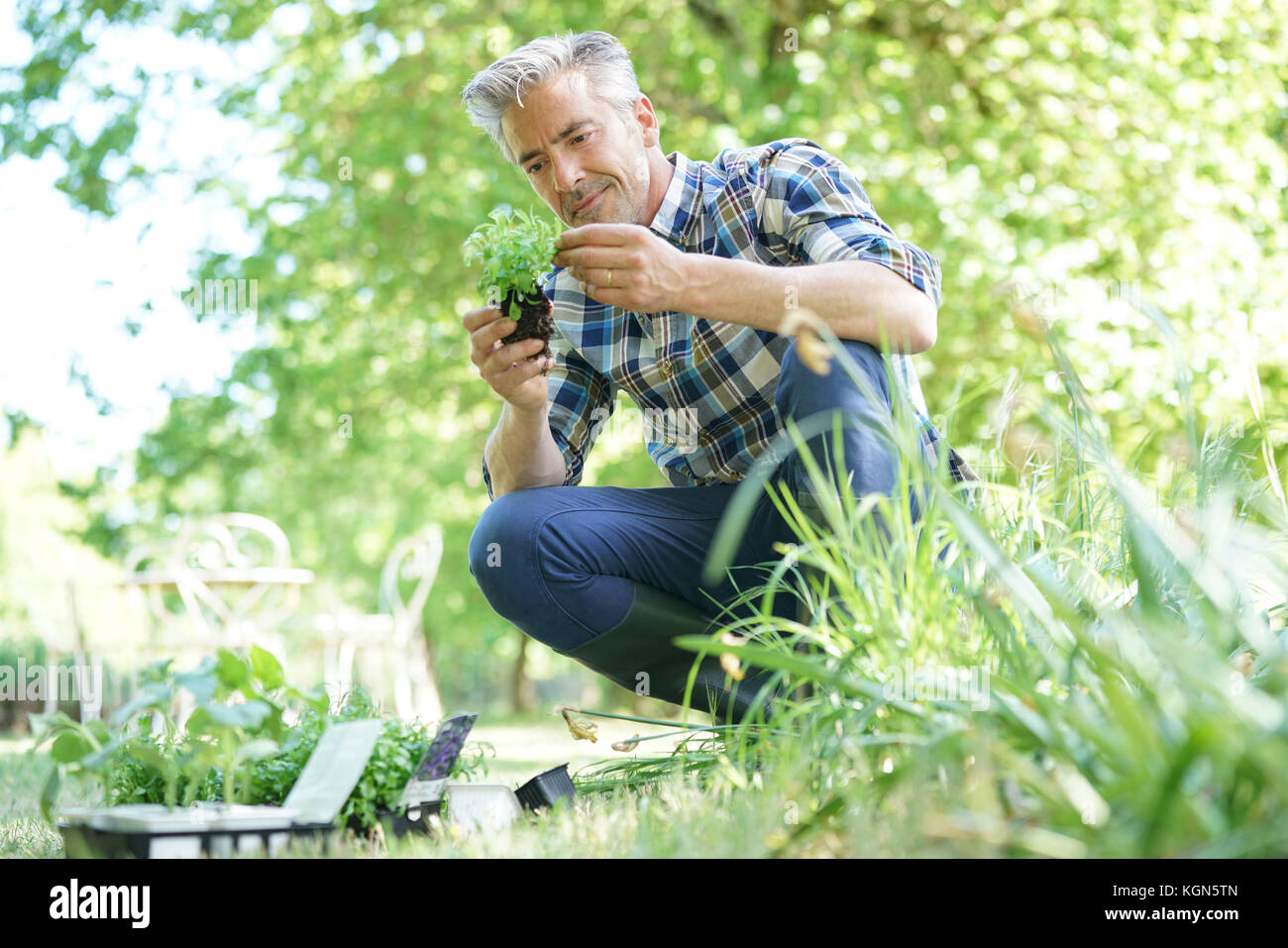Mature man in garden planting new flowers - Stock Image