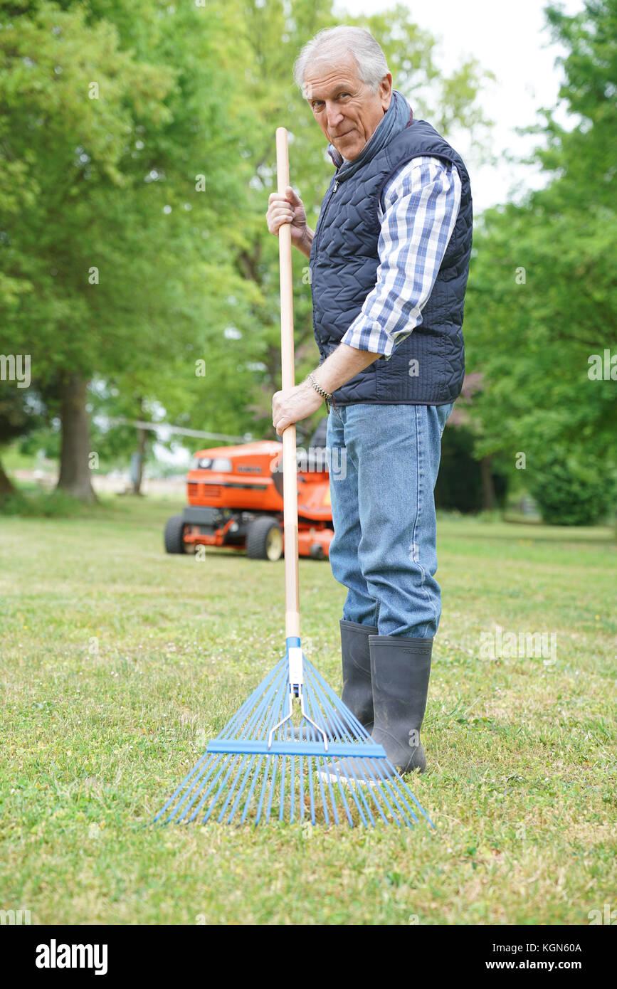 Senior man in garden cleaning lawn with rake - Stock Image
