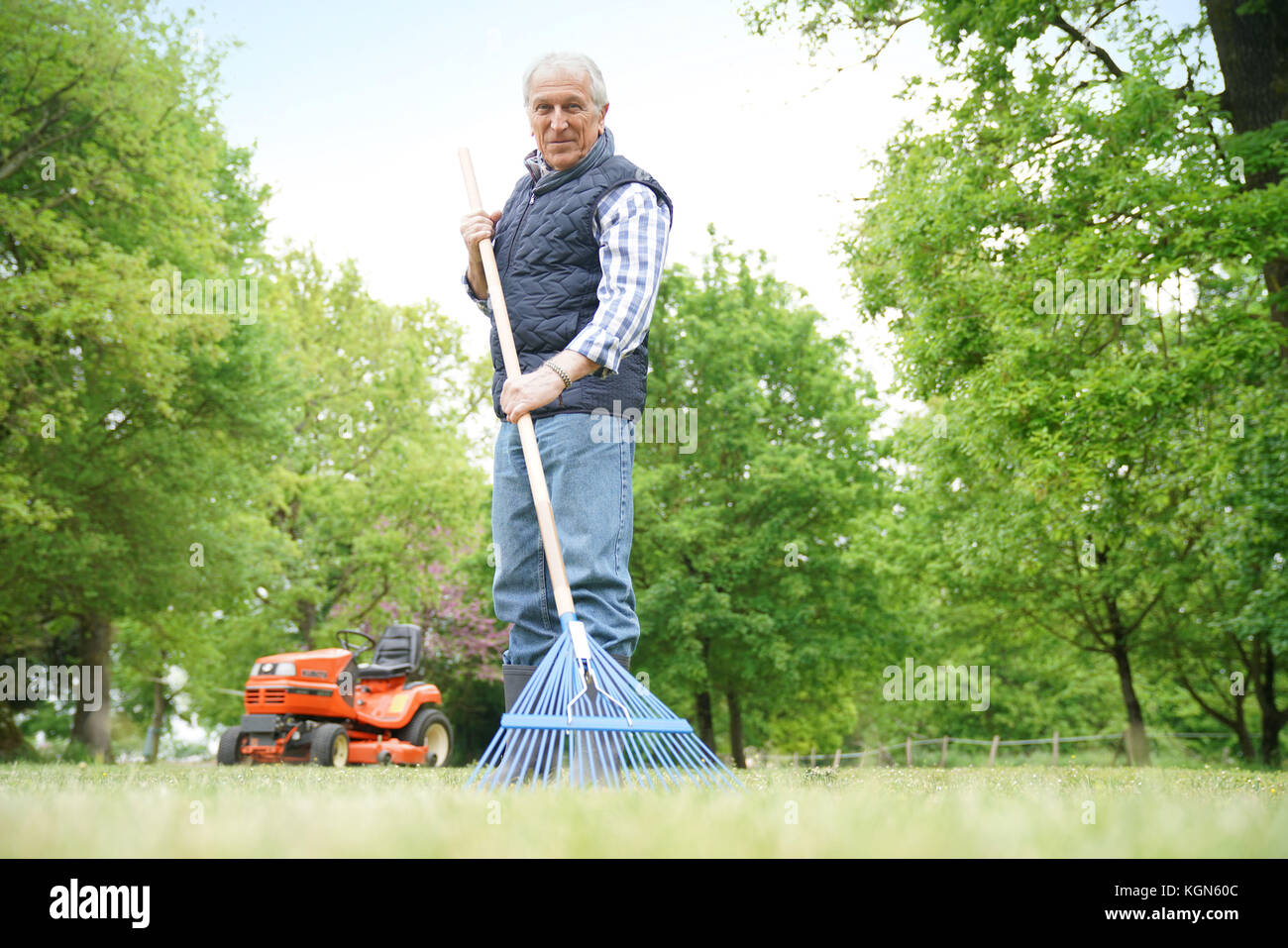 Senior man in garden cleaning lawn with rake - Stock Image