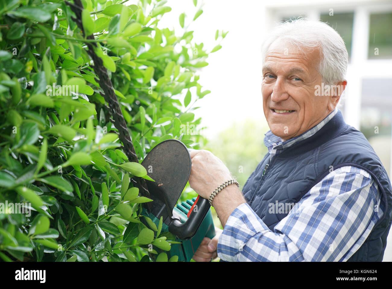 Senior man using hedge trimmer Stock Photo