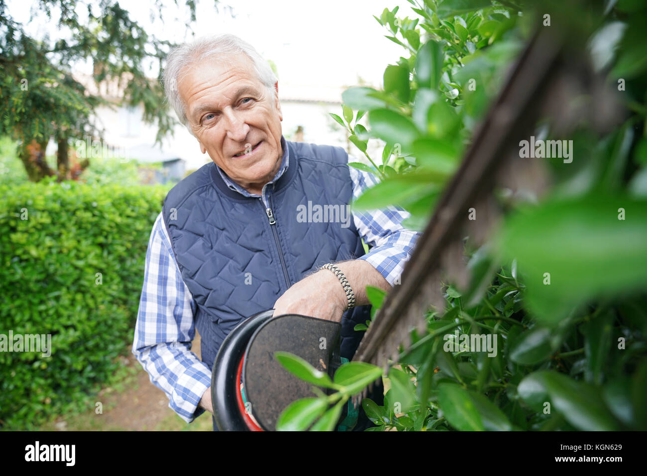Senior man using hedge trimmer - Stock Image