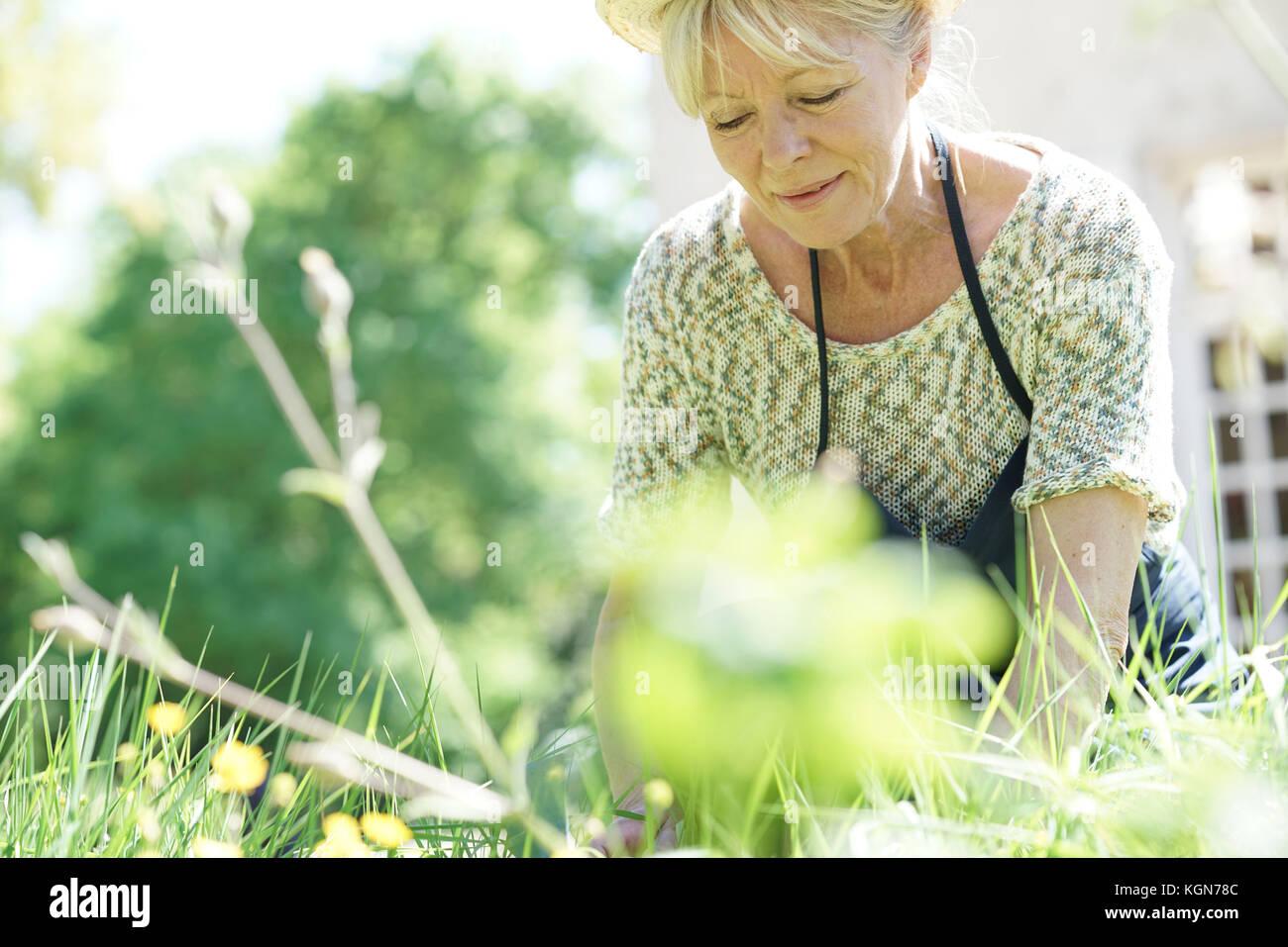 Senior woman gardening on beautiful spring day - Stock Image