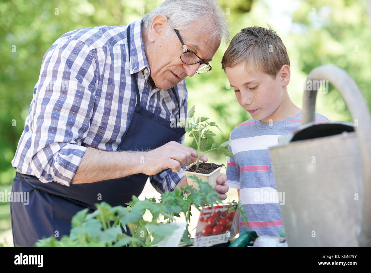 Grandfather with grandson gardening together - Stock Image