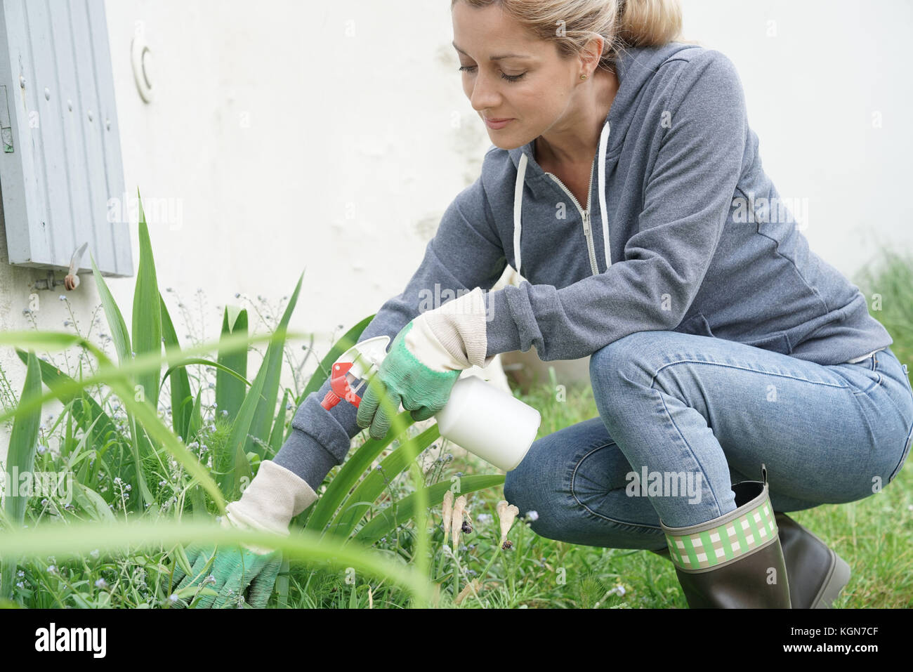 Woman in garden spraying insecticide over plants - Stock Image