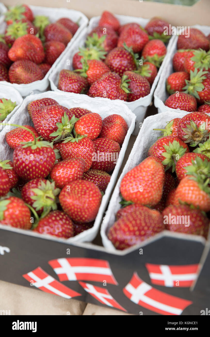 Danish Strawberries in summer, Gilleleje, Zealand, Denmark, Europe - Stock Image