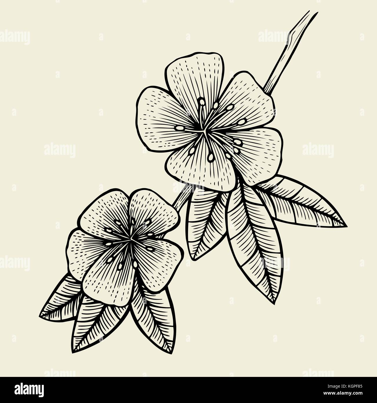 Hand drawn sketch flower of fruit tree blossom vector illustration isolated on beige