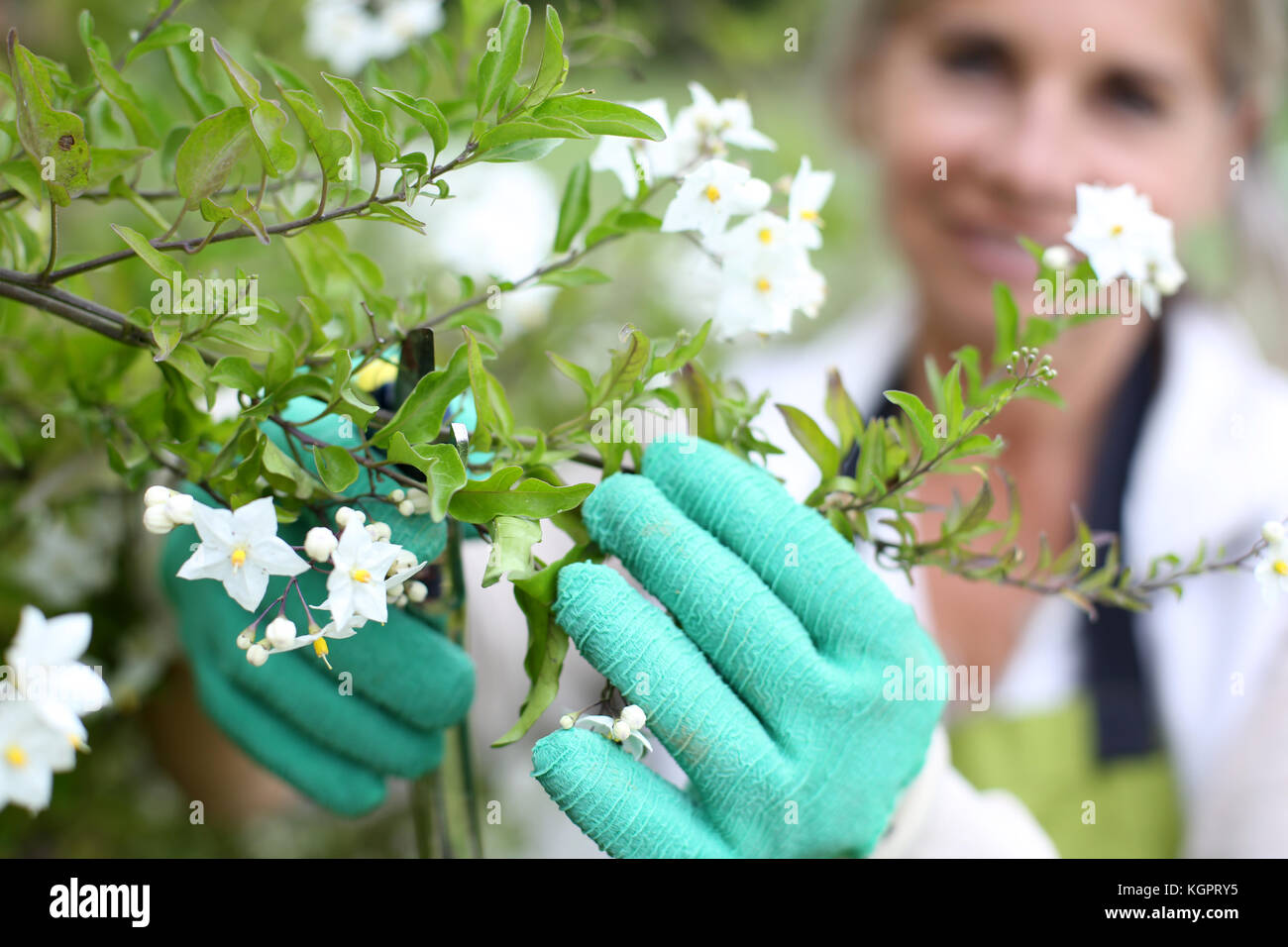 Senior woman cultivating flowers - Stock Image
