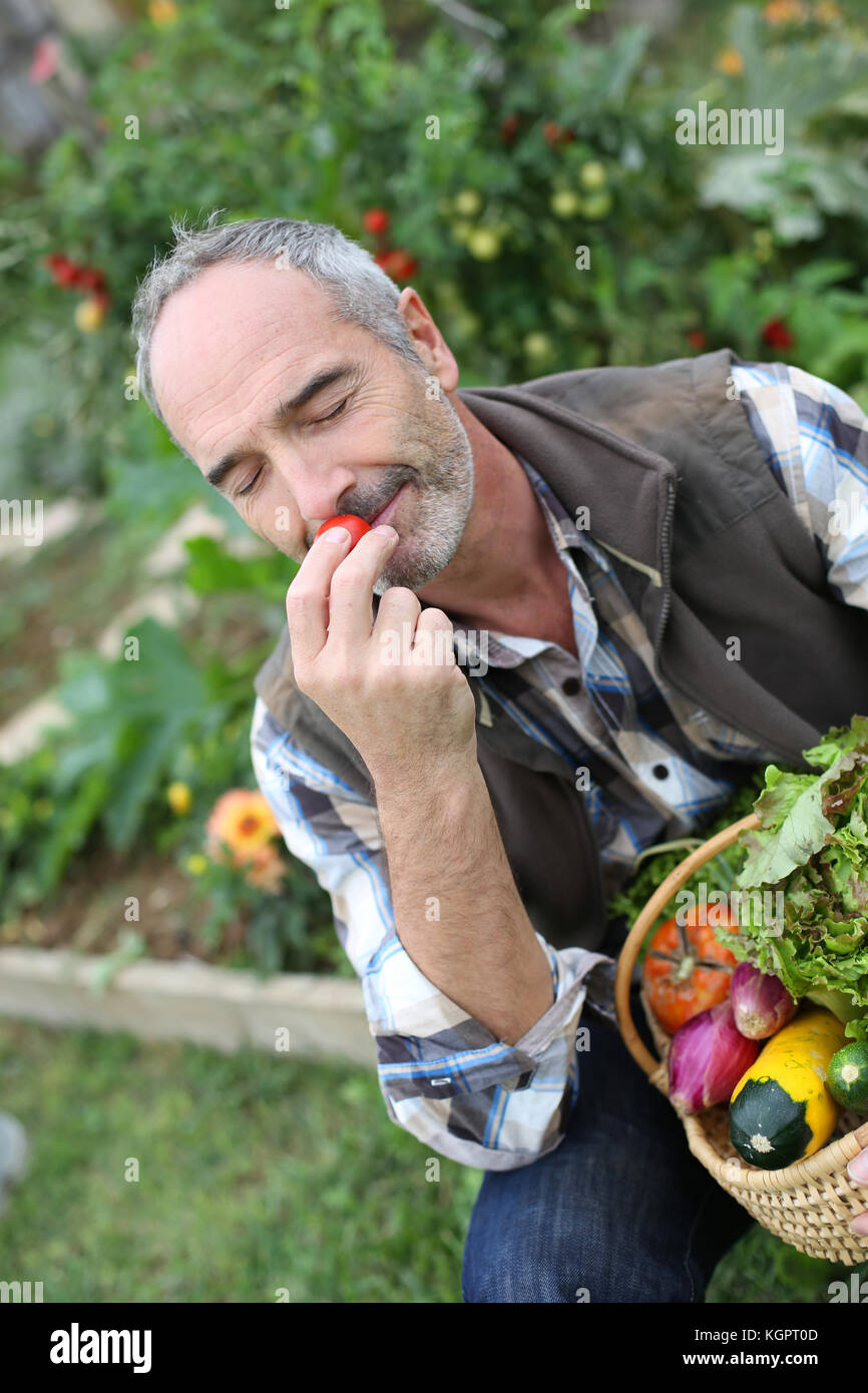 Mature man in garden smelling vegetable's aromas - Stock Image
