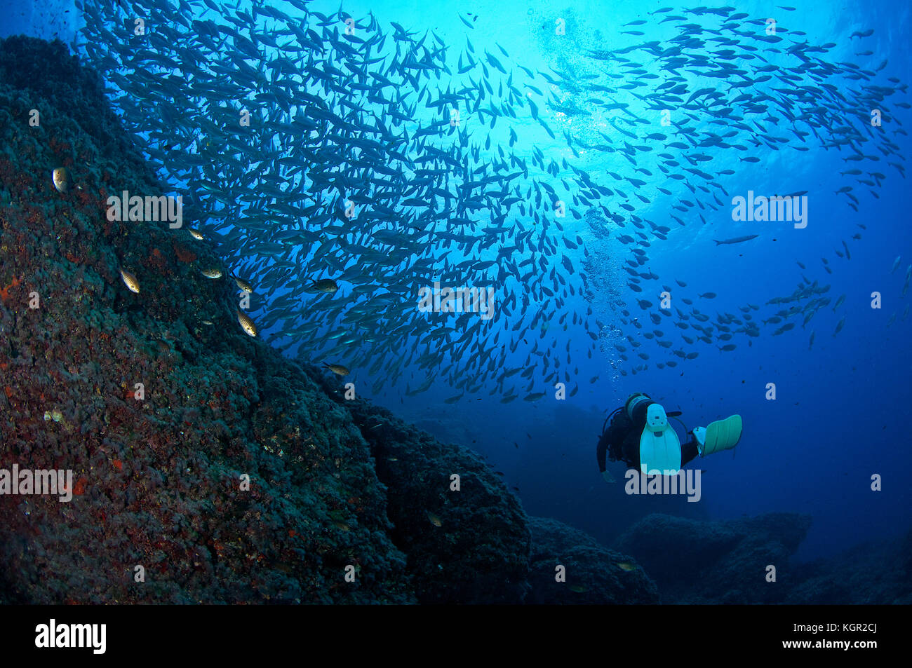Scuba diver and fish school at Dado dive site in Ibiza (Balearic Islands, Spain) - Stock Image
