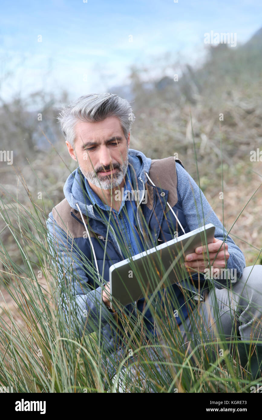 Agronomist using tablet and checking on vegetation - Stock Image