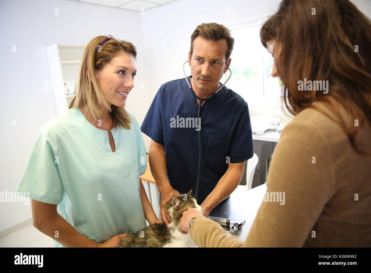 Veterinarian in clinic checking on cat health - Stock Image