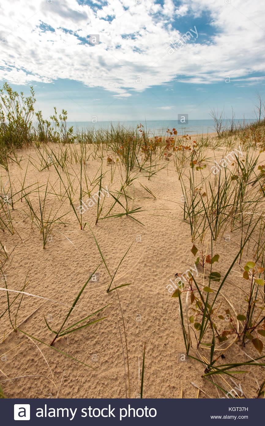 Sand dune grasses grow and stabilize the sand dunes along Lake Michigan at Kohler-Andrae State Park, Sheboygan, - Stock Image