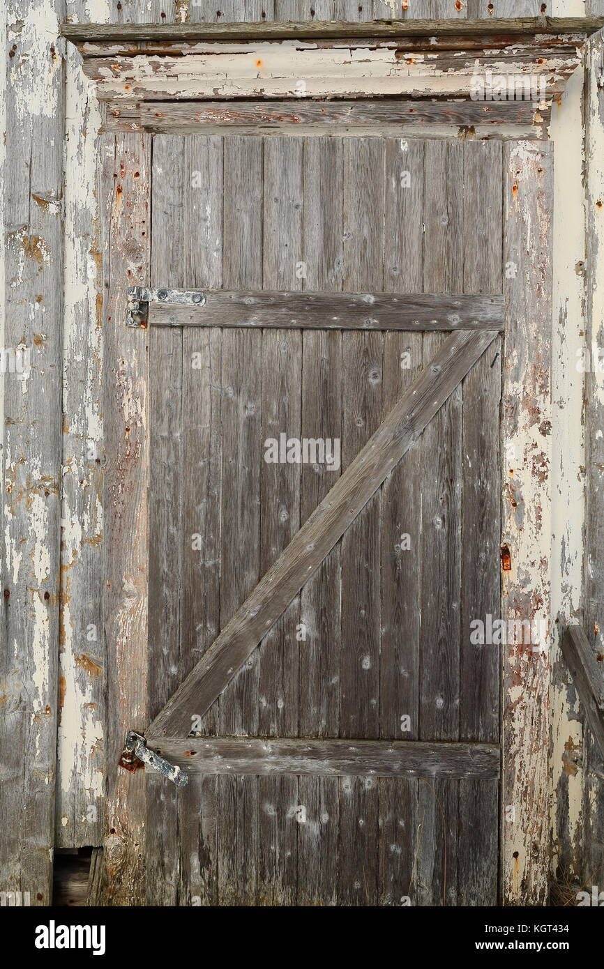 Closed Hinged Batten Door Of Snow Covered Fully Ruined Abandoned Paint  Faded Wooden