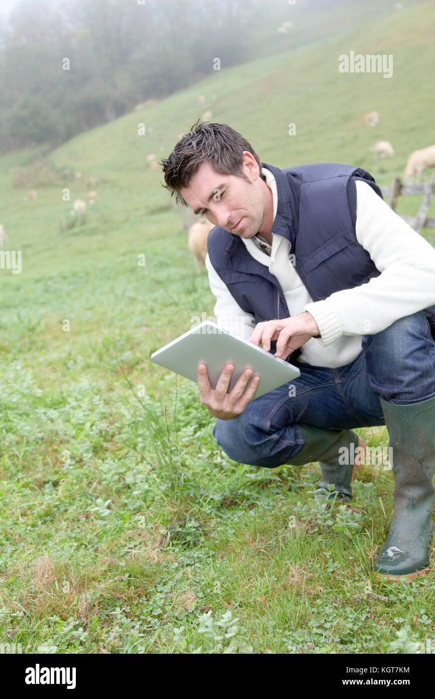 Breeder using electronic tablet in field Stock Photo