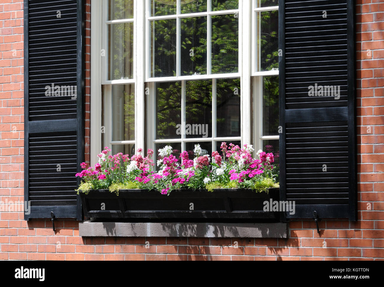 Elegant window box detail. Black box and shutters, white double-hung window frame, red brick wall, pink and white - Stock Image