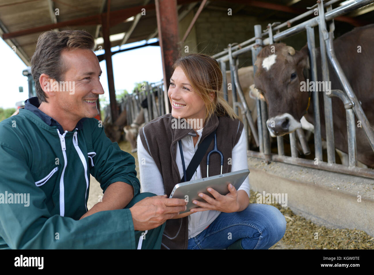 Veterinarian with breeder using tablet - Stock Image