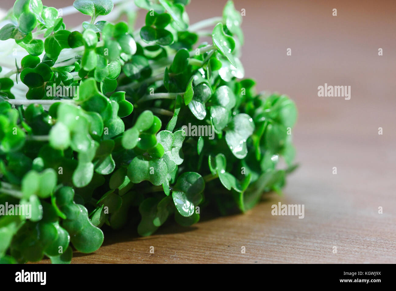 macro image of cut  organic cress used for salads and plant based meals a herb with health benefits , shot in a - Stock Image