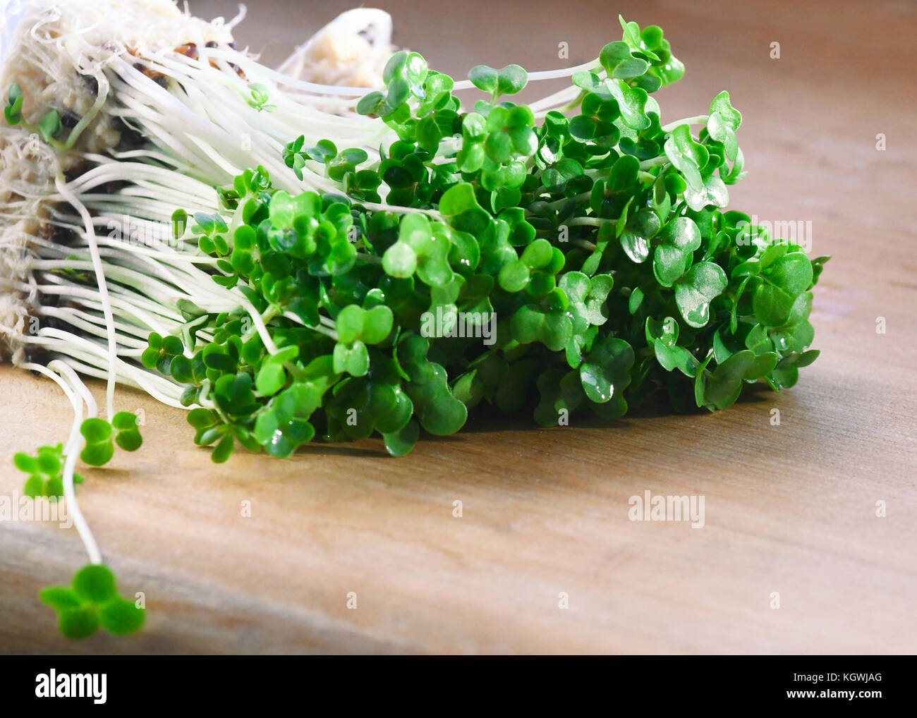 macro of rooted organic cress used for salads and plant based meals a herb with health benefits , shot in a selective - Stock Image