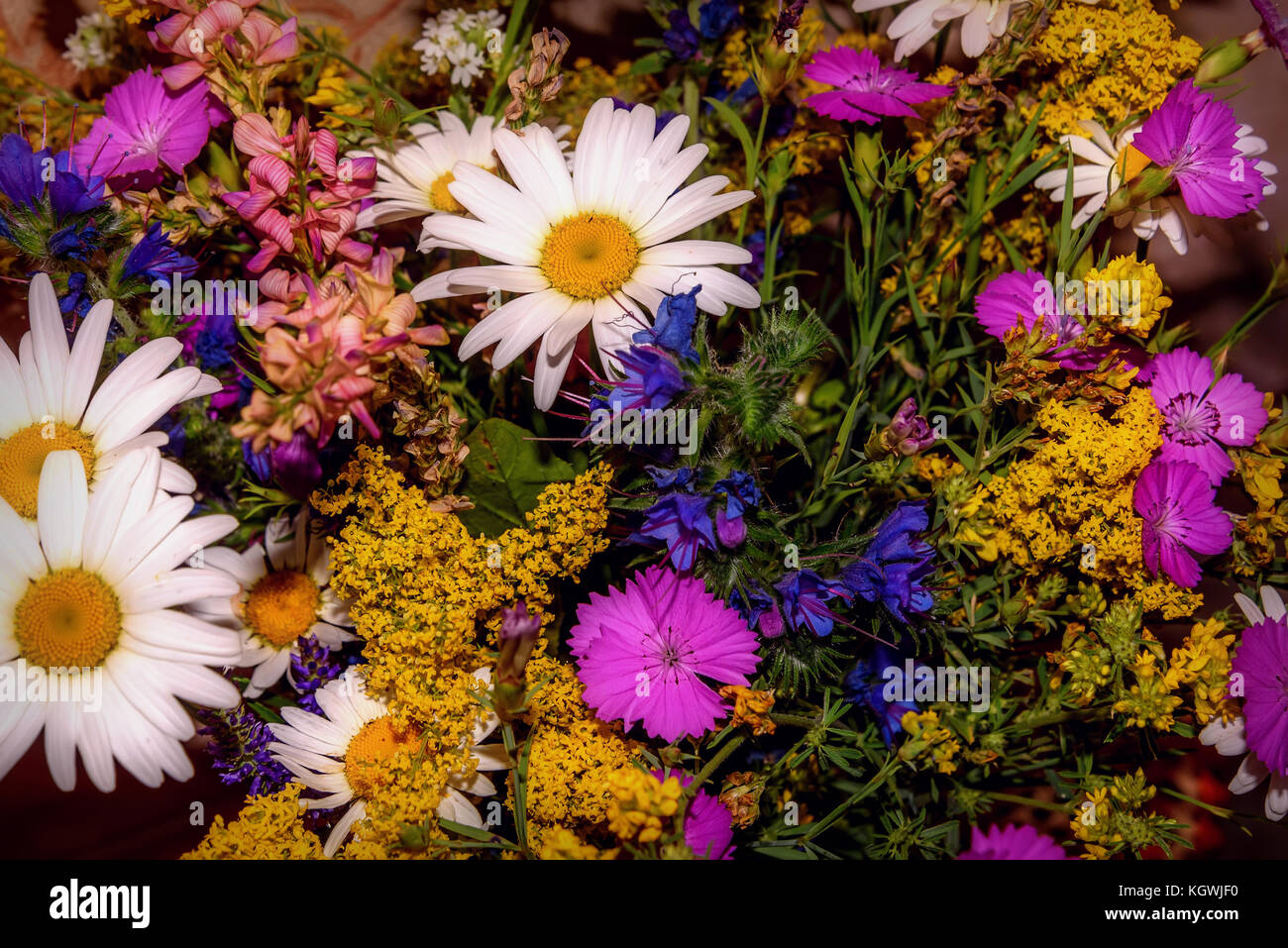 Beautiful bright floral background with colorful bouquet of different wildflowers - Stock Image