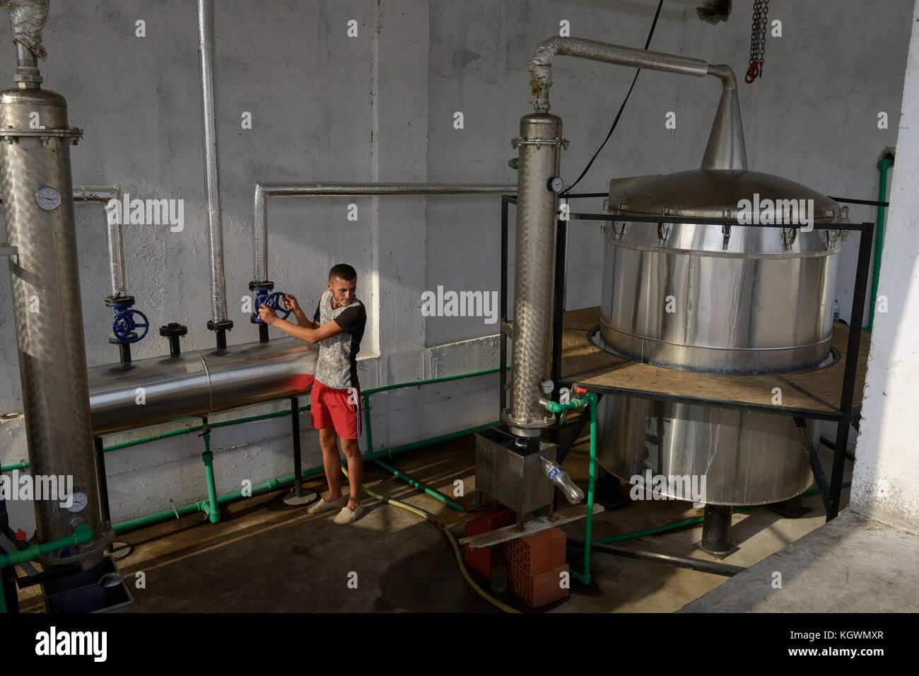 ALBANIA, Shkodra, farming of herbal and medical plants, essential oil distillery of Agro-Map/ ALBANIEN, Shkoder, - Stock Image