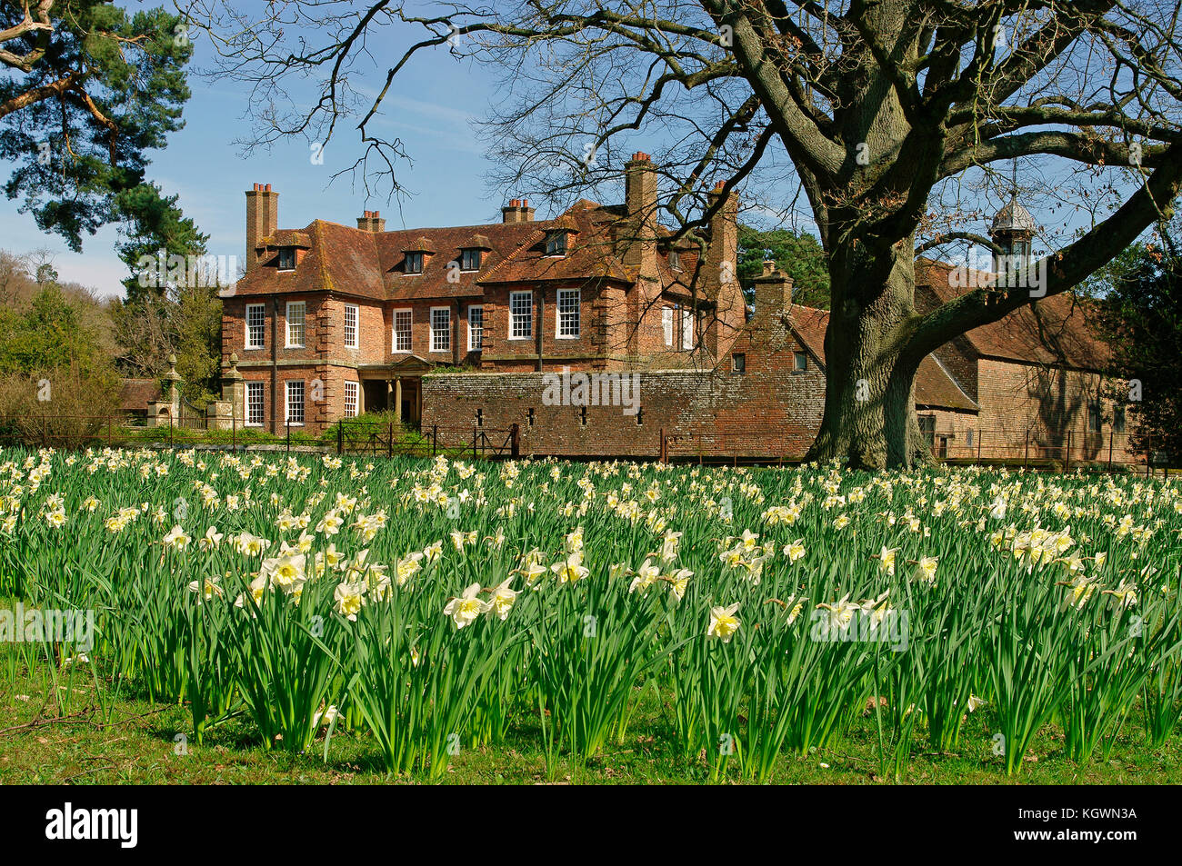 Groombridge Place with daffodils Kent - Stock Image