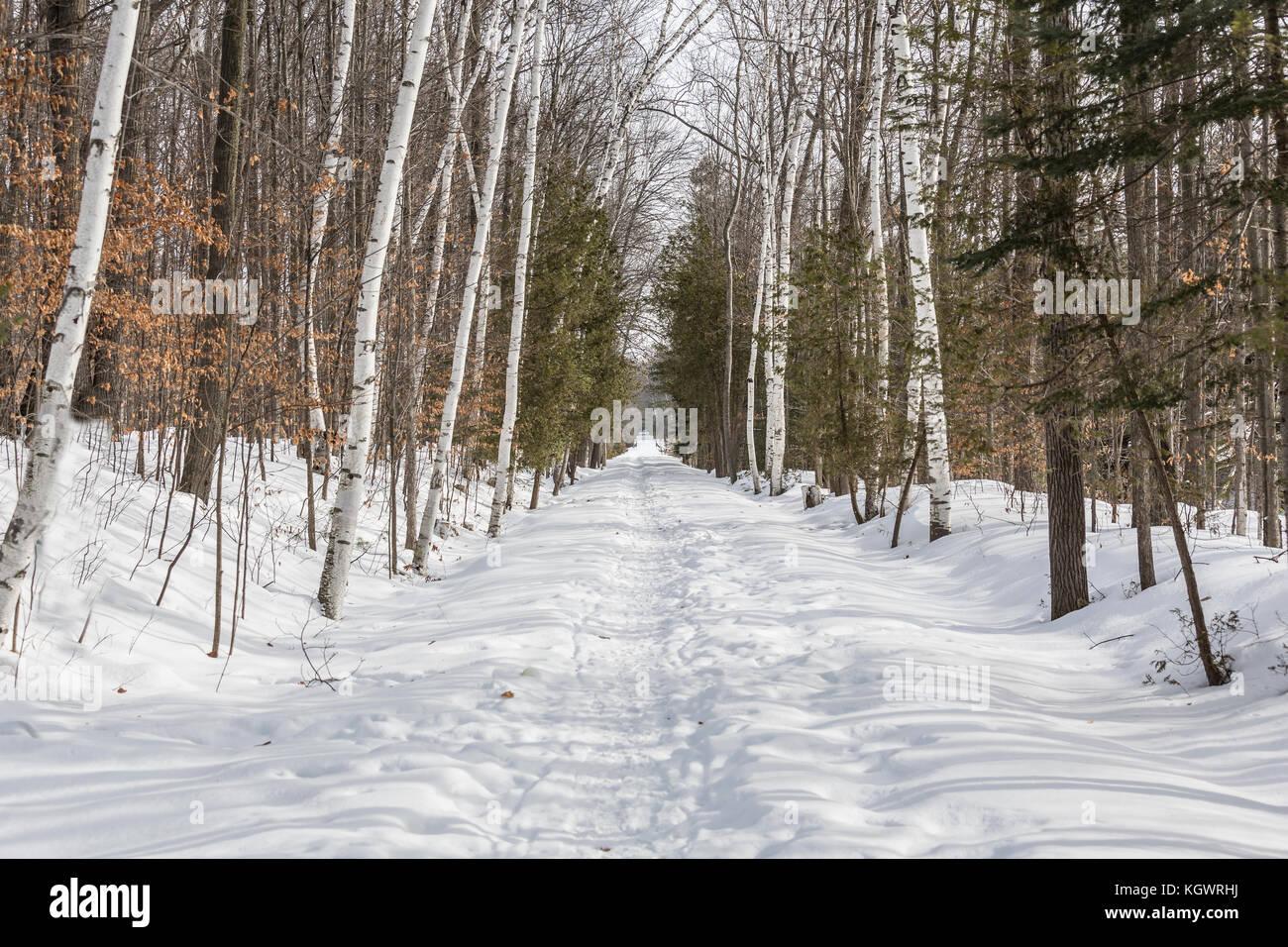 Canadian winter scene - Stock Image
