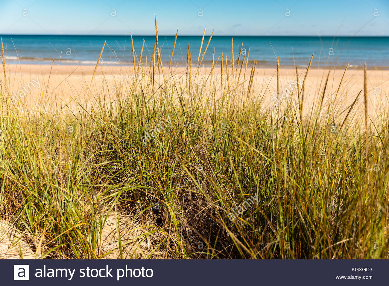 Looking at the calm Lake Michigan in eary October from behind the dune grasses at Harrington Beach State Park, Belgium, - Stock Image