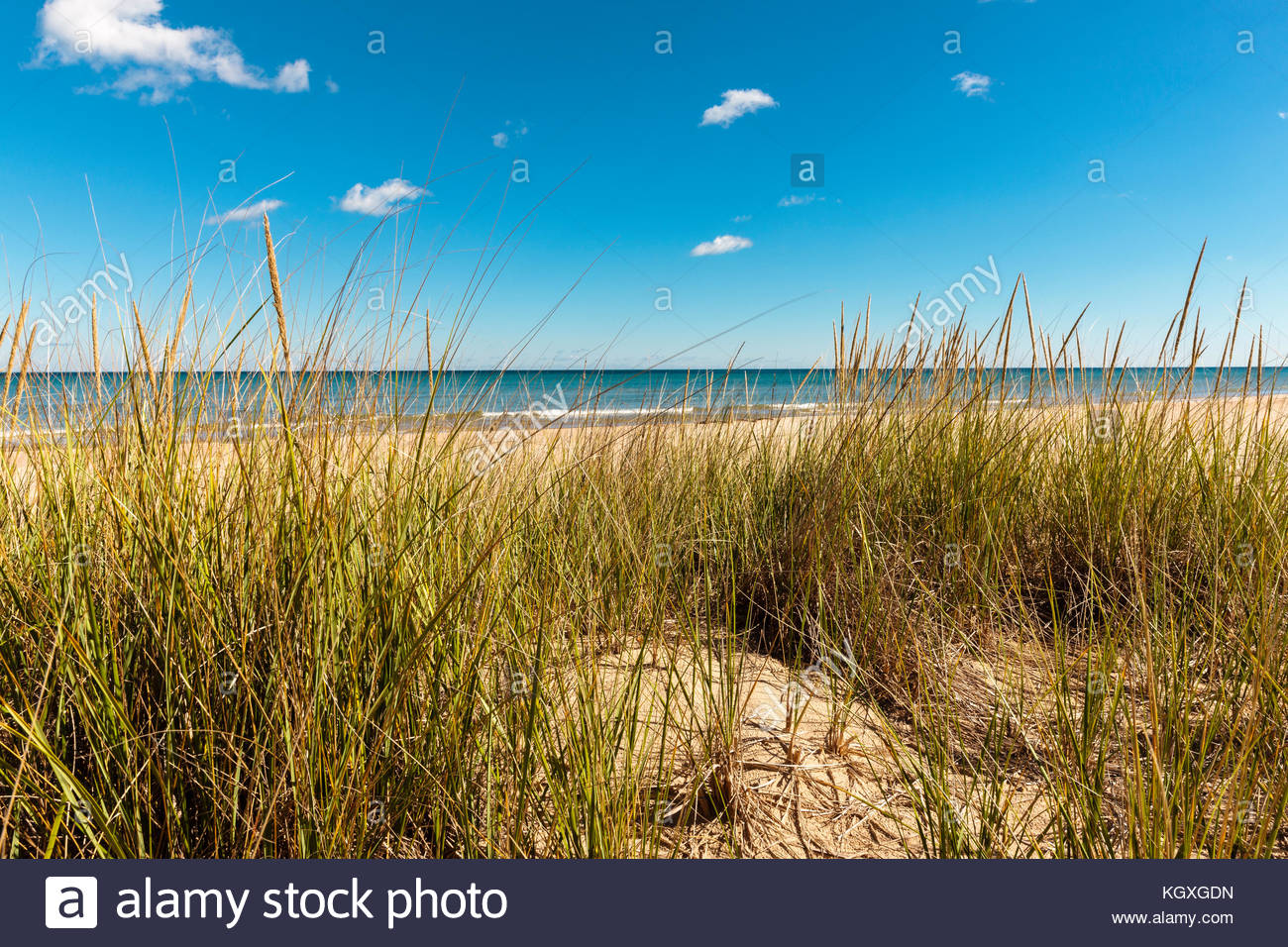 The dune grasses within Harrington Beach State Park, Belgium, Wisconsin, partially obscures the view of Lake Michigan - Stock Image