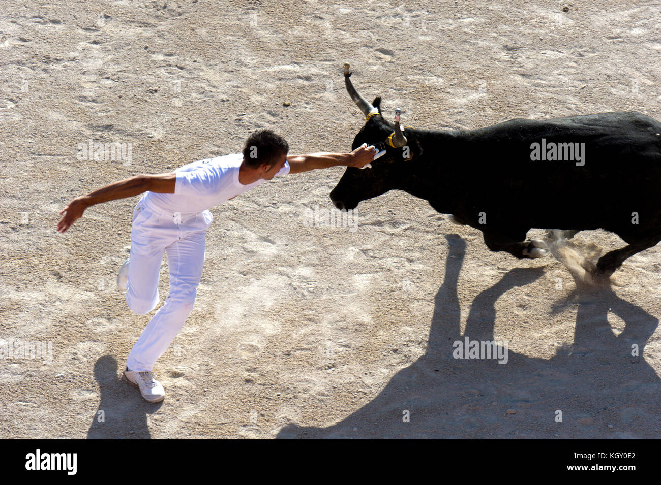 France, Bouches du Rhone (13), Camargue, Arles. Race Camargue, Bullfighting in the arena of Saintes Maries de la - Stock Image