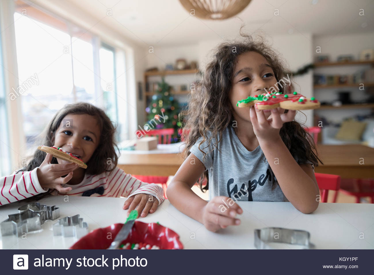 Girl sisters eating decorated Christmas gingerbread cookies in kitchen - Stock Image