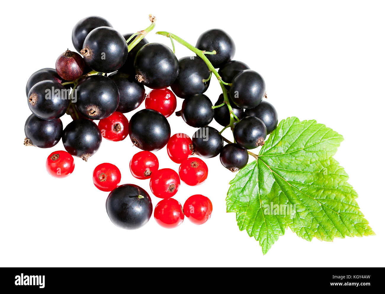 fresh berries of currant isolated on a white background. berries black currant and red currant with green leaves Stock Photo