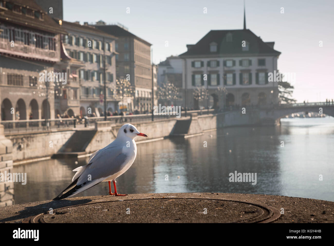 Zurich landscape with river Limmat and a seagull in the foreground - Stock Image