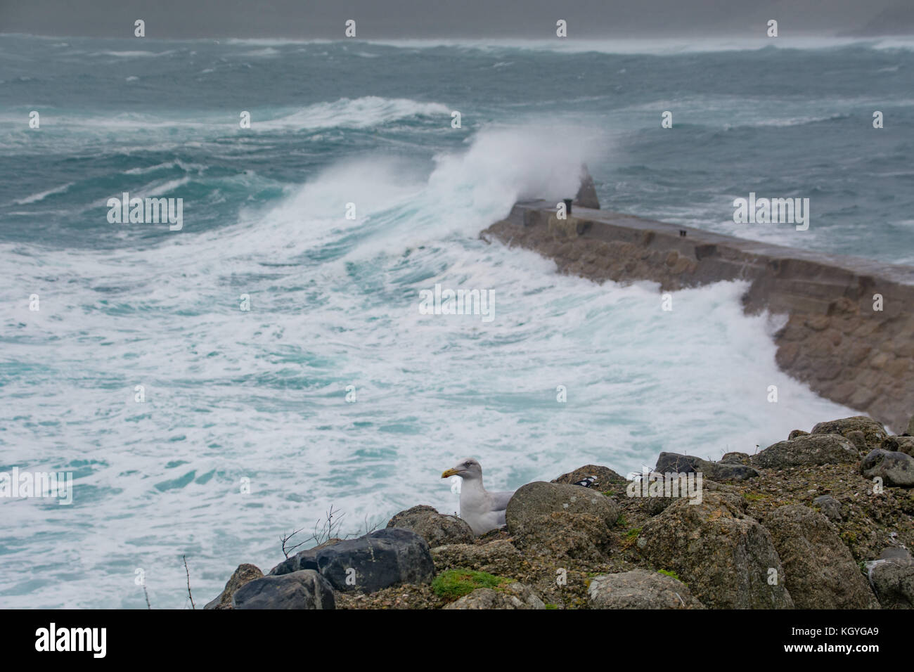 Sennen Cove, Cornwall, UK. 11th Nov, 2017. UK Weather. Strong winds approaching 50mph and waves hitting the north - Stock Image