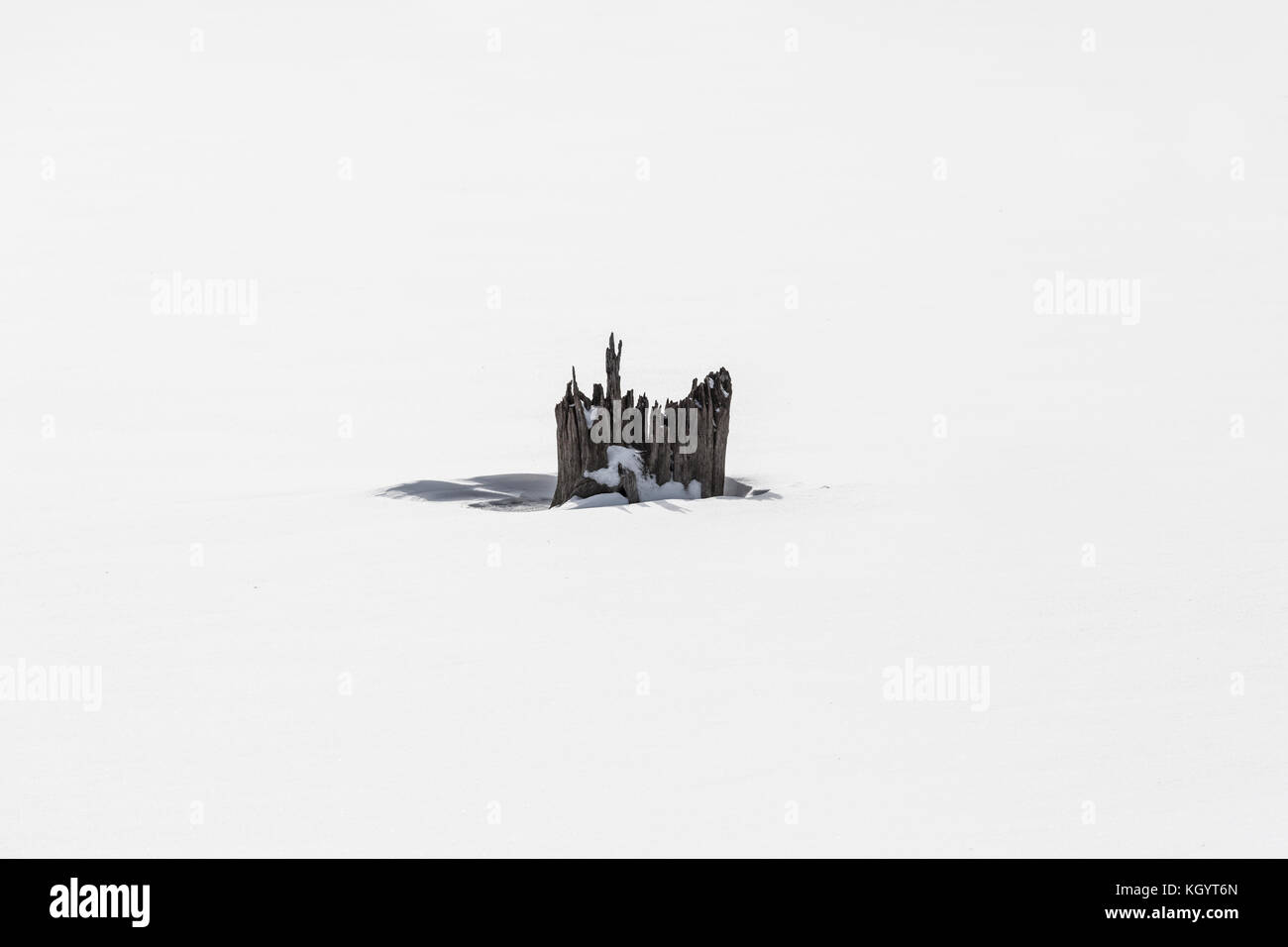 Dead of winter - Stock Image