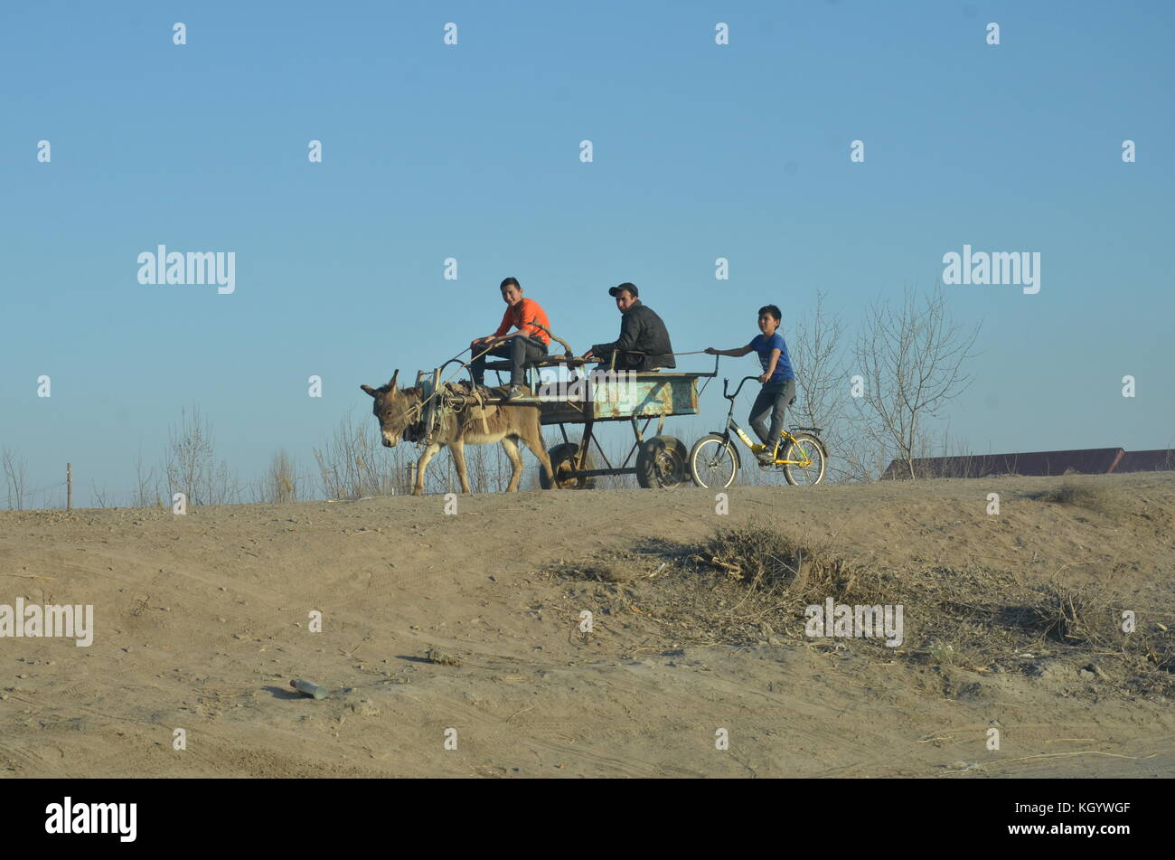 tree children / teenagers in the desert riding on a donkey, cart and bicycle in Uzbekistan. Stock Photo