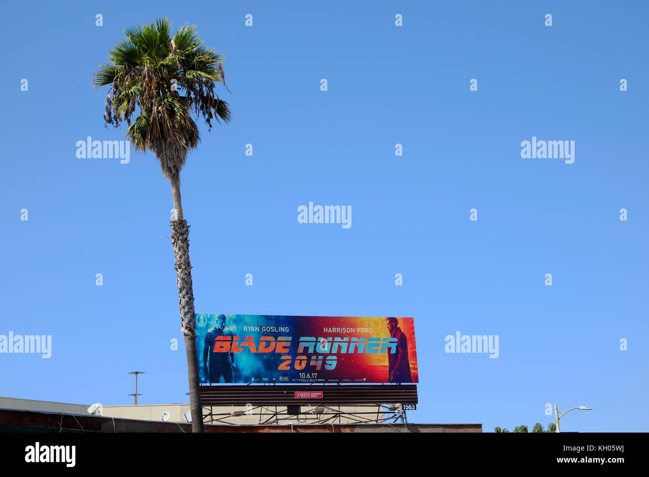 Blade Runner 2049 billboard, palm tree and blue sky on the corner of  Hollywood Boulevard & Sunset Boulevard, - Stock Image