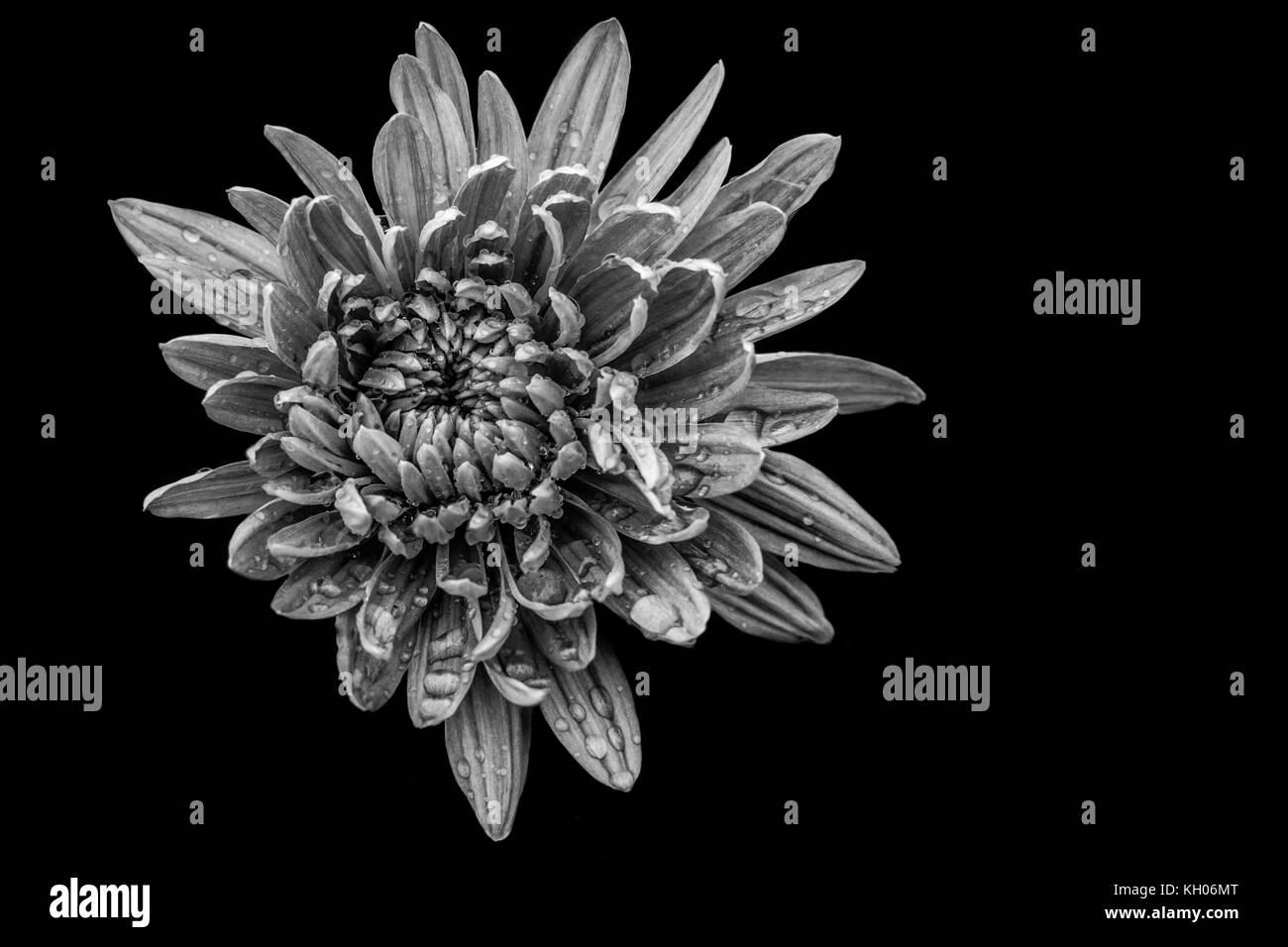 #2 Flower - Stock Image