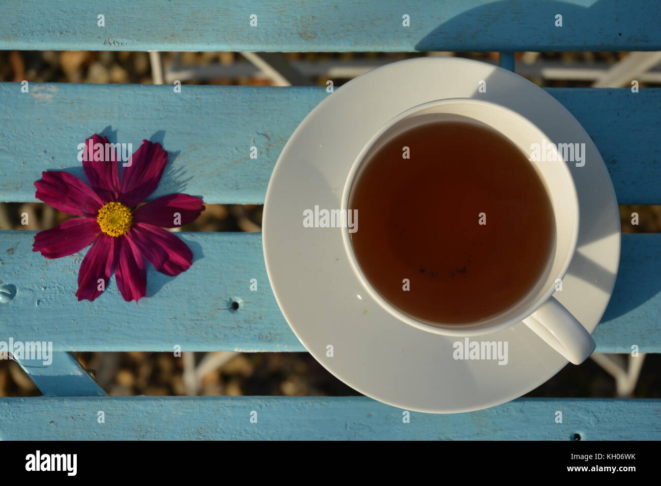 Cup of Tea and Flower on blue table - Stock Image