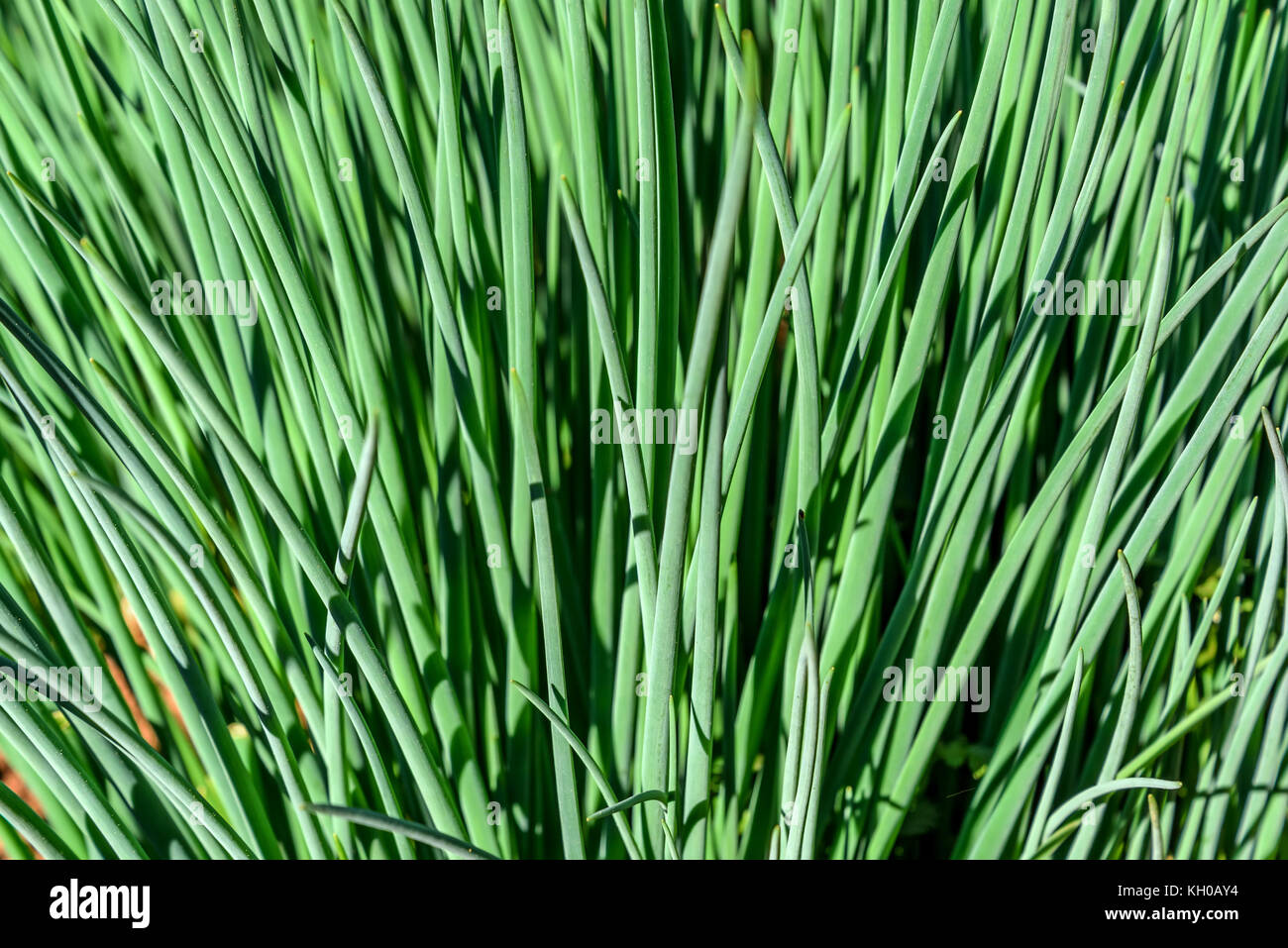 Feathers Bed Stock Photos & Feathers Bed Stock Images - Alamy