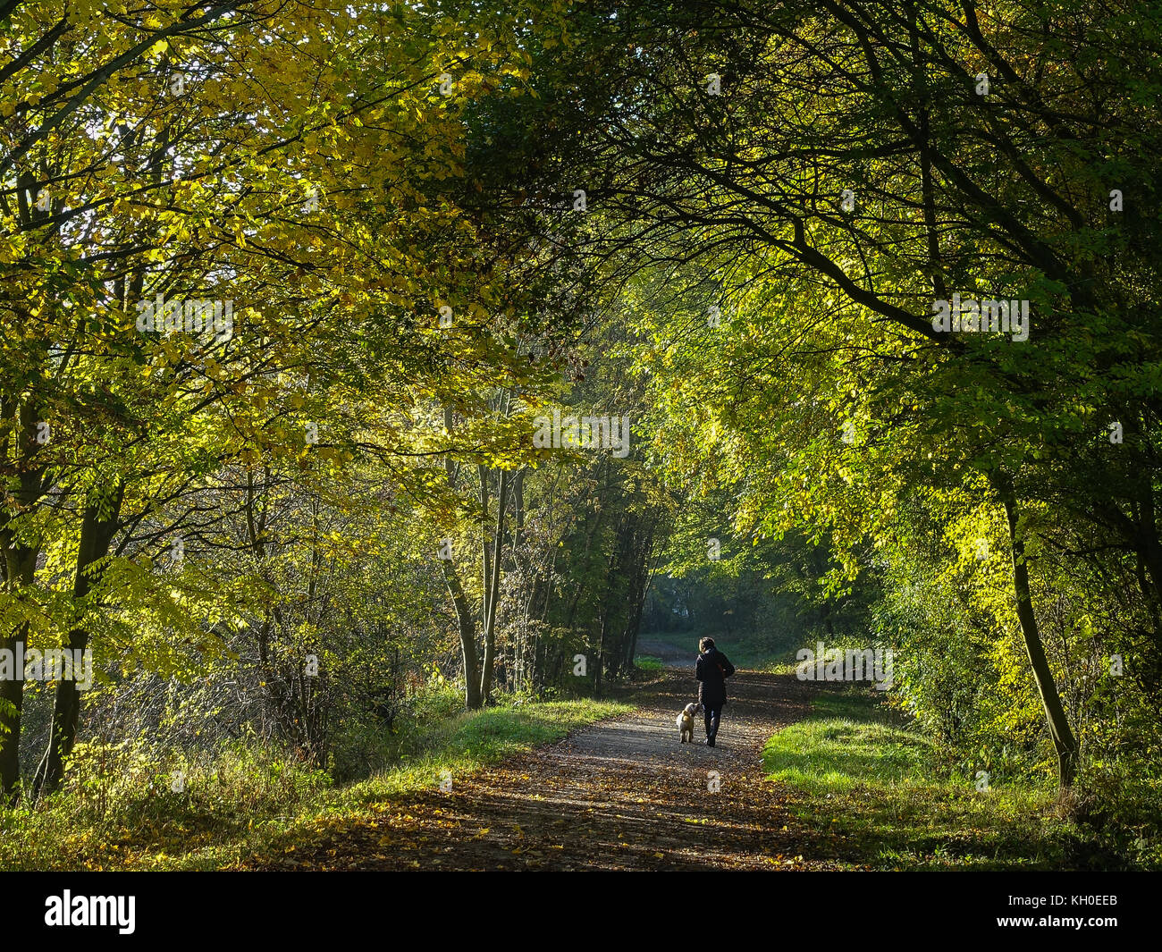 Autumn view along Monsal Trail near Bakewell, with dog walker and lovely autumn colours - Stock Image
