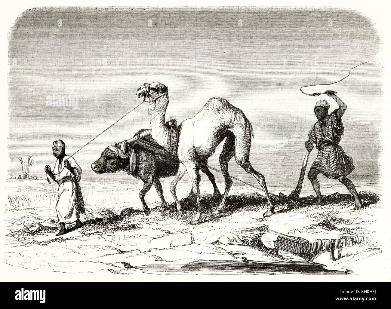 Old illustration depicting Egyptian countrymen plowing. By Girardet, publ. on Magasin Pittoresque, Paris, 1847 - Stock Image