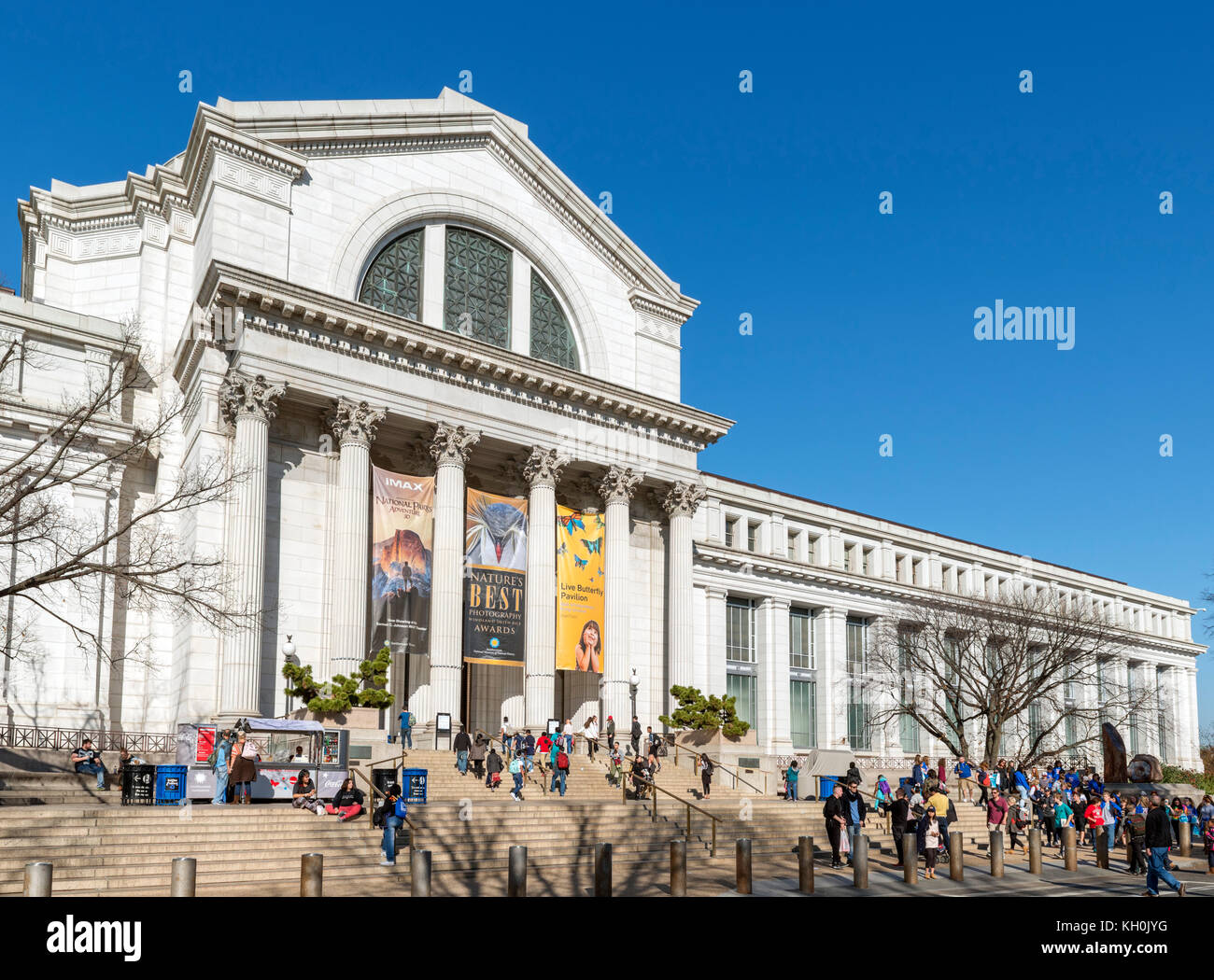 National Museum of Natural History, Washington DC, USA - Stock Image