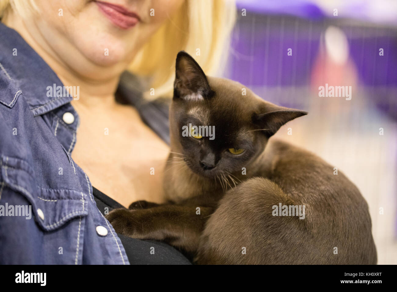 ROME, ITALY - NOVEMBER 11, 2017: The Super Cat Show, one of the most important feline events from Italy and in the - Stock Image