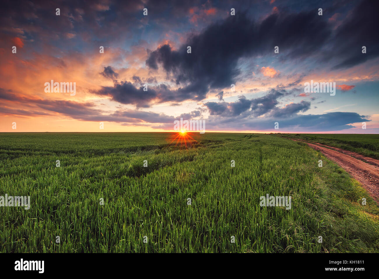 Sunset over green wheat field - Stock Image